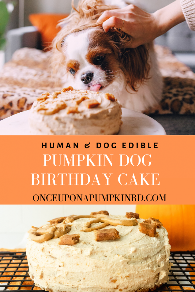 Miraculous Pumpkin Dog Birthday Cake Once Upon A Pumpkin Funny Birthday Cards Online Sheoxdamsfinfo