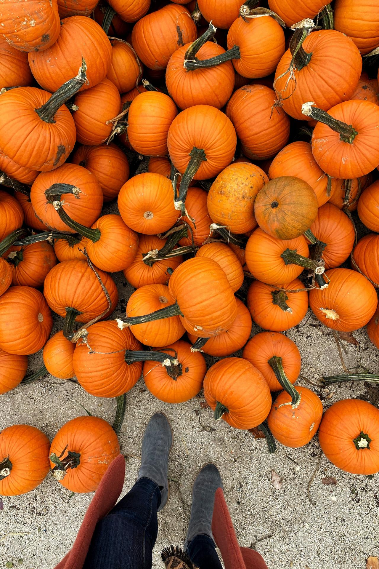 best pumpkin recipes for national pumpkin day